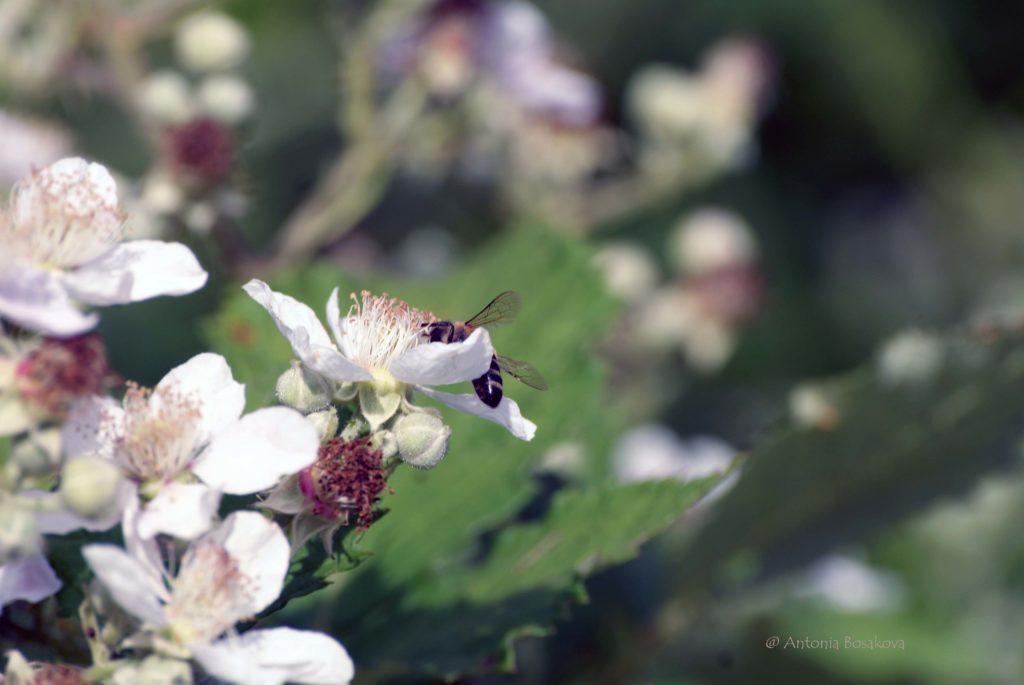 За пчелите - събрани стихове и мисли