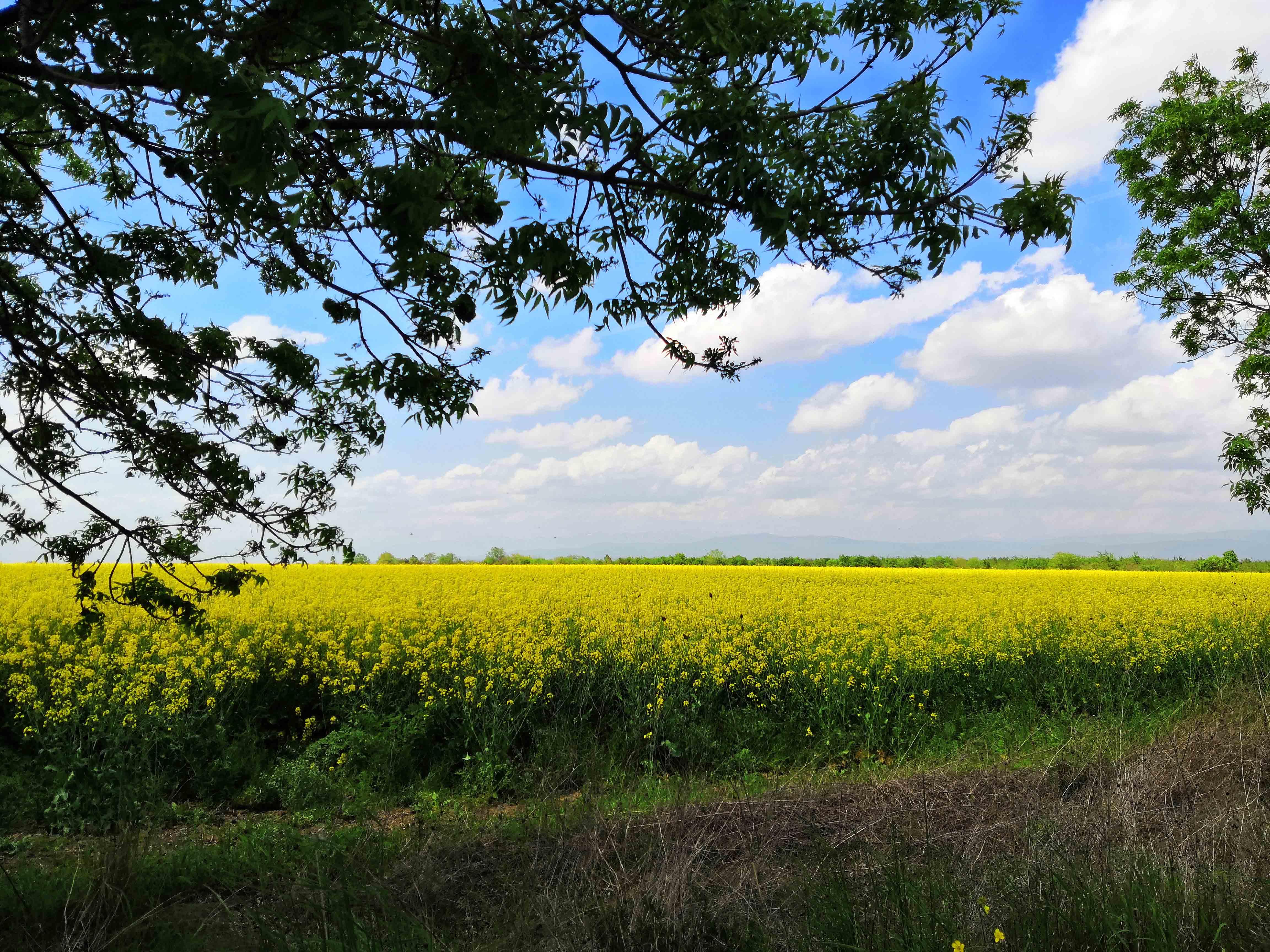 Пейзаж от село Брезово